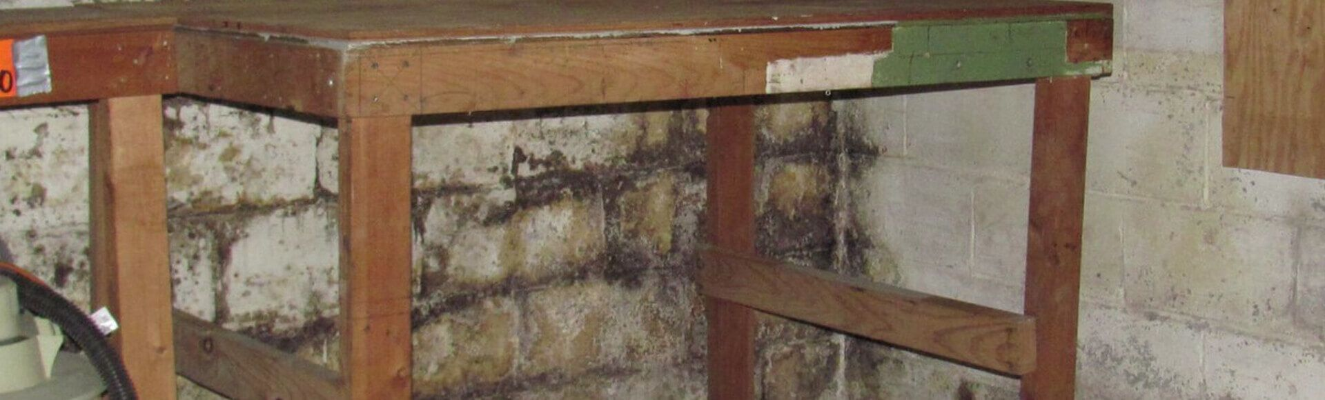 Basement & Crawl Space Mold Remediation Company