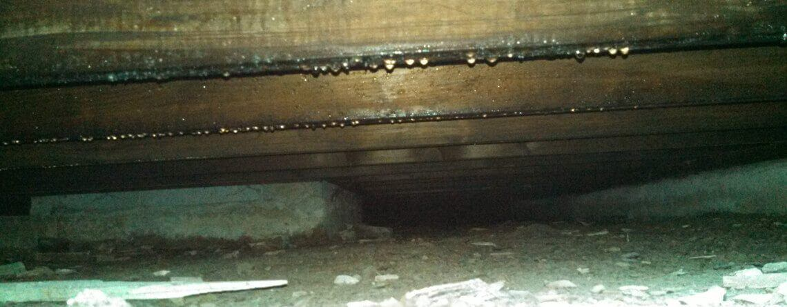 Crawl Space Dehumidification Service