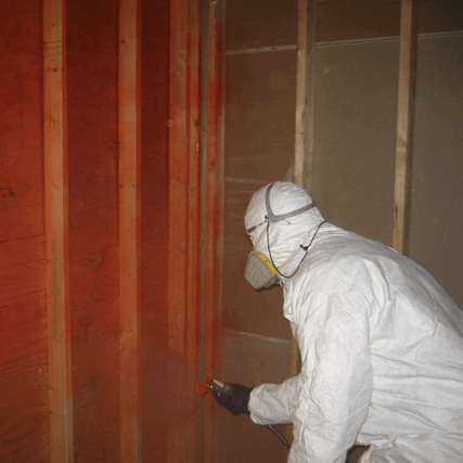 mold treatment services